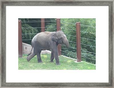 National Zoo - Elephant - 01131 Framed Print