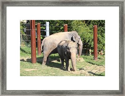 National Zoo - Elephant - 011312 Framed Print