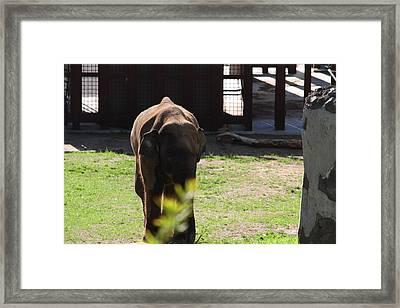 National Zoo - Elephant - 011314 Framed Print
