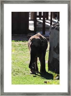 National Zoo - Elephant - 011315 Framed Print
