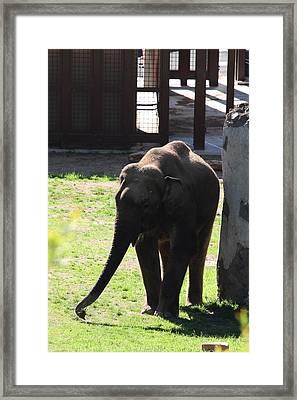 National Zoo - Elephant - 011316 Framed Print