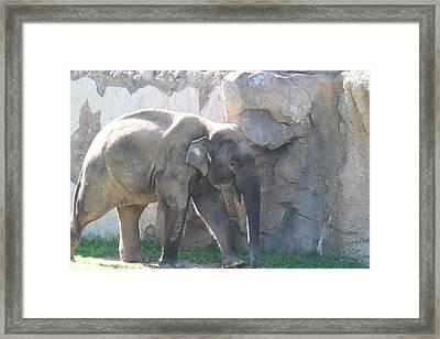National Zoo - Elephant - 011318 Framed Print