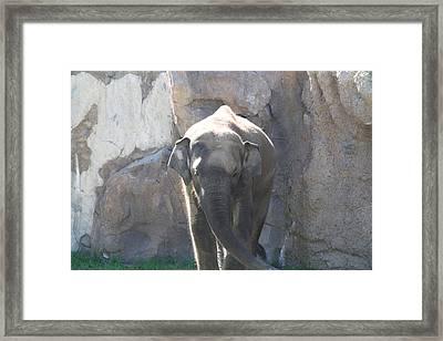 National Zoo - Elephant - 011320 Framed Print