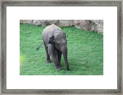 National Zoo - Elephant - 01139 Framed Print