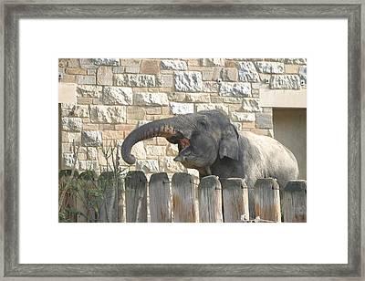 National Zoo - Elephant - 12121 Framed Print