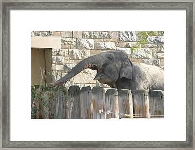 National Zoo - Elephant - 12122 Framed Print
