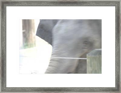 National Zoo - Elephant - 12124 Framed Print