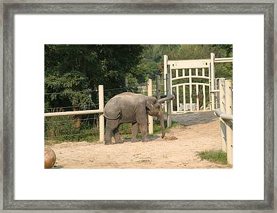National Zoo - Elephant - 12127 Framed Print by DC Photographer