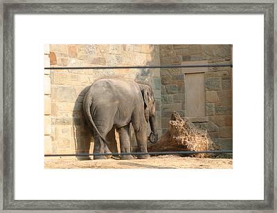 National Zoo - Elephant - 12128 Framed Print