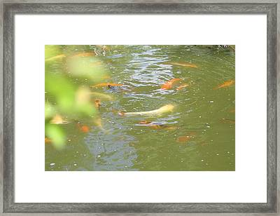 National Zoo - Fish - 011316 Framed Print