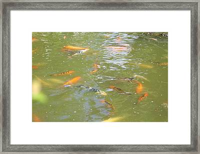 National Zoo - Fish - 011317 Framed Print by DC Photographer