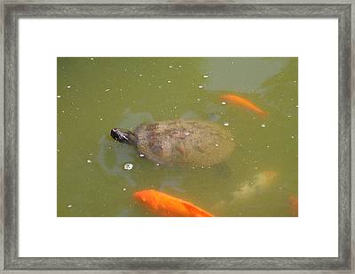 National Zoo - Fish - 011318 Framed Print by DC Photographer
