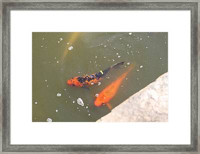 National Zoo - Fish - 01132 Framed Print by DC Photographer