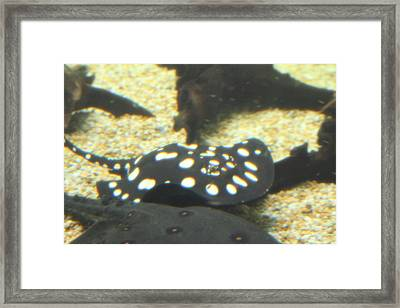 National Zoo - Fish - 01137 Framed Print by DC Photographer