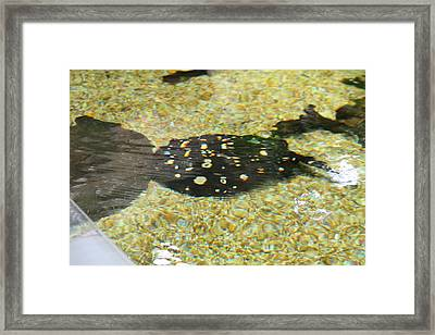 National Zoo - Fish - 01138 Framed Print by DC Photographer