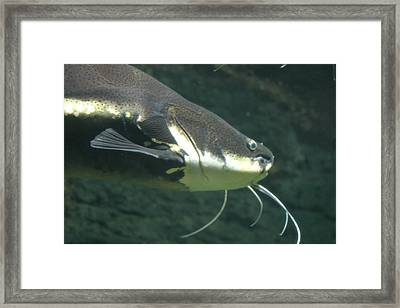 National Zoo - Fish - 12121 Framed Print