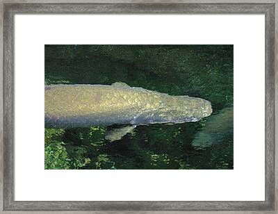 National Zoo - Fish - 12125 Framed Print