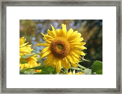 National Zoo - Flower - 12126 Framed Print