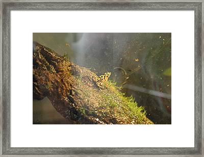 National Zoo - Frog - 12121 Framed Print by DC Photographer