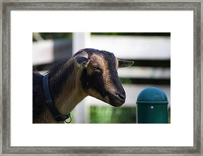 National Zoo - Goat - 01132 Framed Print by DC Photographer