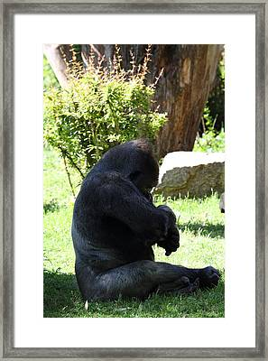National Zoo - Gorilla - 011319 Framed Print by DC Photographer