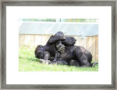 National Zoo - Gorilla - 011333 Framed Print by DC Photographer