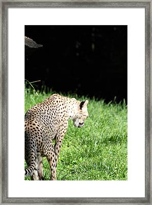 National Zoo - Leopard - 011310 Framed Print