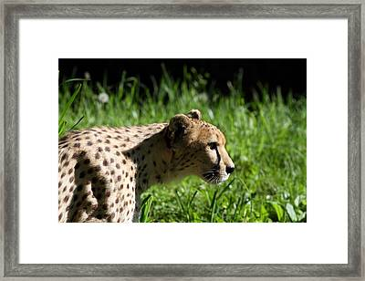 National Zoo - Leopard - 011316 Framed Print by DC Photographer