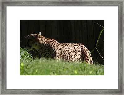 National Zoo - Leopard - 011321 Framed Print