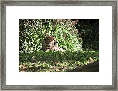 National Zoo - Leopard - 01133 Framed Print