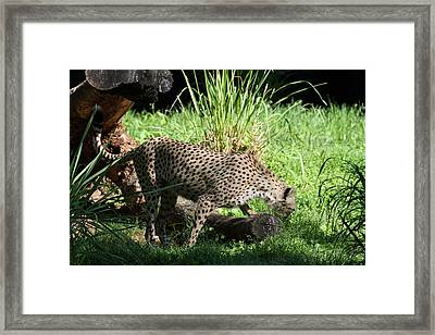 National Zoo - Leopard - 01137 Framed Print by DC Photographer