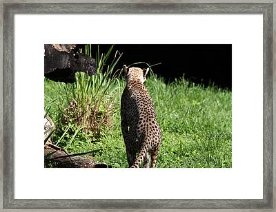National Zoo - Leopard - 01138 Framed Print