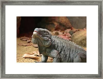 National Zoo - Lizard - 12121 Framed Print by DC Photographer