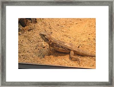 National Zoo - Lizard - 12126 Framed Print