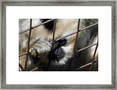 National Zoo - Mammal - 011311 Framed Print by DC Photographer