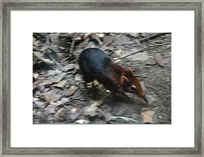 National Zoo - Mammal - 121213 Framed Print