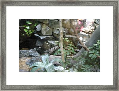 National Zoo - Mammal - 121219 Framed Print by DC Photographer