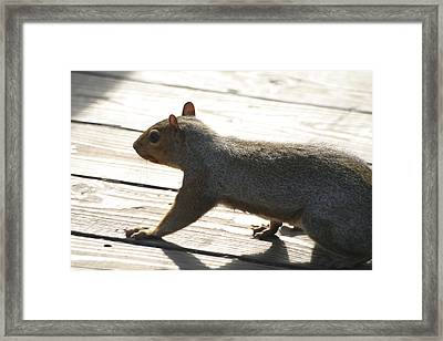 National Zoo - Mammal - 12122 Framed Print by DC Photographer