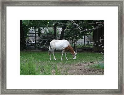 National Zoo - Mammal - 121221 Framed Print
