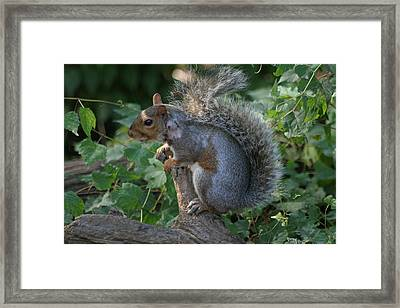 National Zoo - Mammal - 12123 Framed Print by DC Photographer