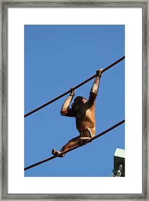 National Zoo - Orangutan - 011318 Framed Print by DC Photographer