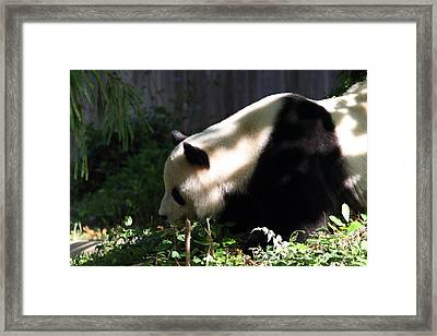 National Zoo - Panda - 011329 Framed Print by DC Photographer