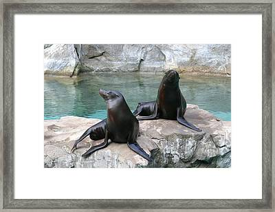 National Zoo - Sea Lion - 12124 Framed Print by DC Photographer