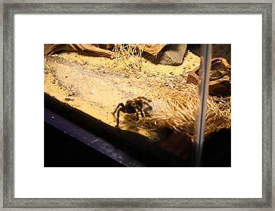 National Zoo - Spider - 01131 Framed Print