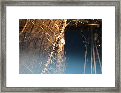 National Zoo - Spider - 01133 Framed Print