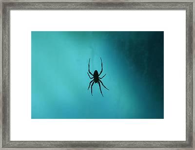 National Zoo - Spider - 12121 Framed Print