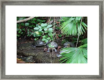 National Zoo - Turtle - 01132 Framed Print