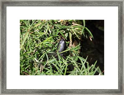 National Zoo - Turtle - 01134 Framed Print by DC Photographer