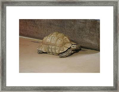 National Zoo - Turtle - 12121 Framed Print by DC Photographer
