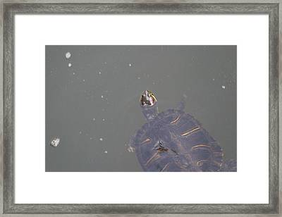 National Zoo - Turtle - 12125 Framed Print by DC Photographer